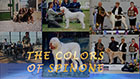 The Colors Of Spinone